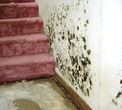 White Plains NY 10603 Mold Removal Remediation