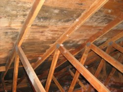 Why is black mold growing in my attic?