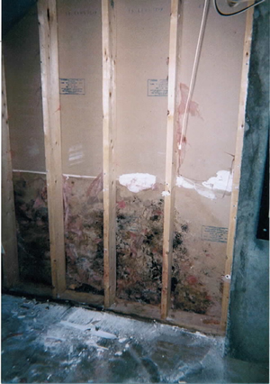 Black Mold In Walls westchester ny black mold remediation | call fresh