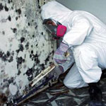 Black Mold Removal and Remediation Westchester NY