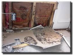 Mold Removal in Ridgewood NJ, Bergen County