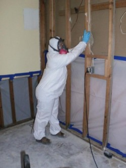 Mold-Removal-studs