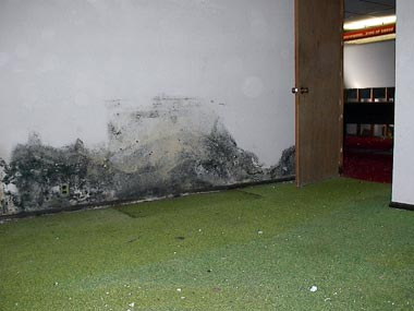 Frequent Causes of Mold Growth