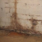 What Not To Do If You Have Mold!